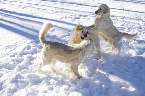 hunar_snow