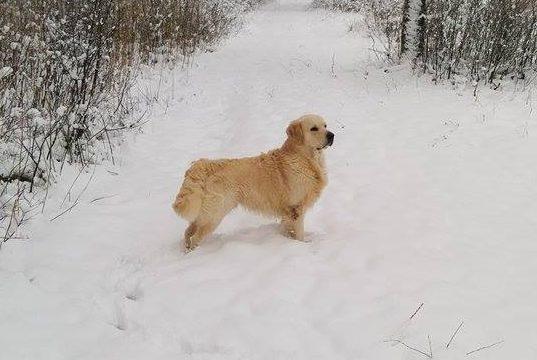 Messi i snön